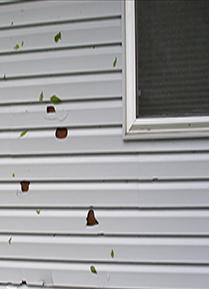 Hail damage need new windows call lone star 806 622 for Hail damage vinyl siding